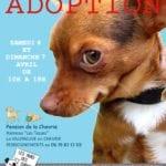 Affiche journée adoption